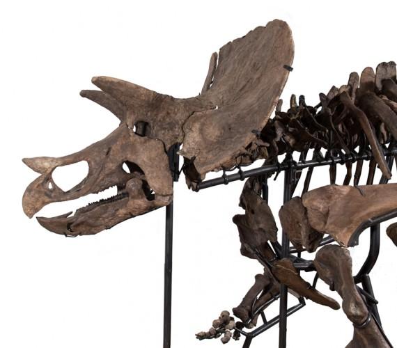 TE-037 Skull mount