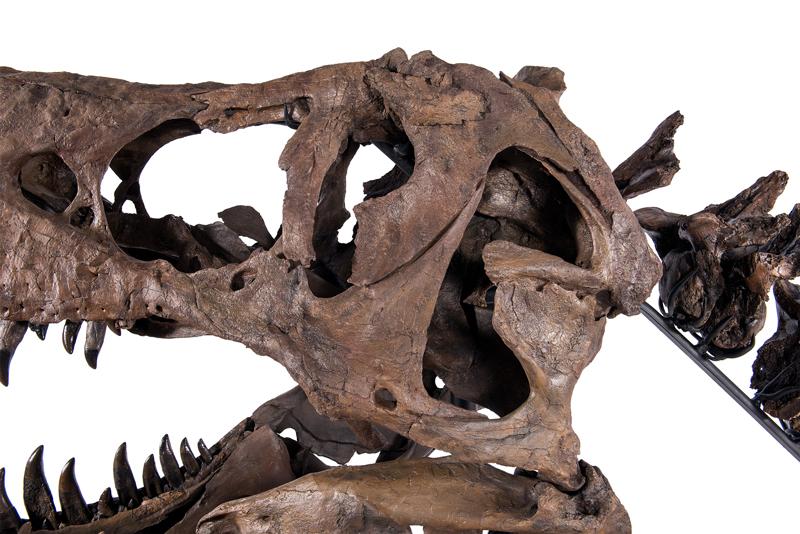 TE-076 Skull (detail)